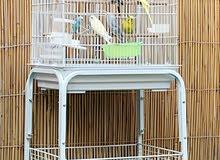 للبيع طيور 3 ايناث 3 ذكور مع القفص وتوصيل 700 درهم فقط