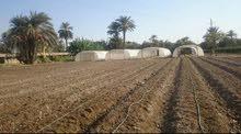 للبيع اراضي مزروعة وغير مزروعة  كاملة  المرافق والخدمات