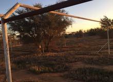 مزرعة في الطلحيه مساحة هكتار و961 متر قريبه من الطريق الرئيسي