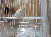 I want to sale a cage with box every thing only for 50 riyals cage I new only 3 days use
