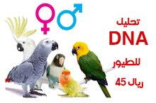 تحليل الحمض النووي DNA لمعرفة نوع الطائر