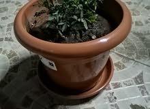 أحواض زرع