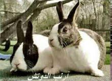 ارانب وزن فوق 1800