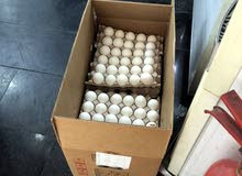 يوجد بيض تركي بسعر مناسب جدااااا