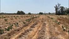 ارض زراعيه للبيع بالقليوبيه عرب العليقات
