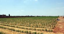 ارض للبيع 66 فدان زراعيه واستثماريه