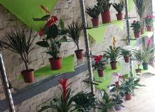 نباتات داخلي