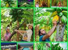 رحلة طرطوس رابع يوم العيد رقم3 3 بعنوان :  Golden Beach  يوم 1 منتجع بلو بيه
