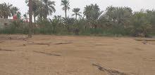 قطعة ارض زراعيه 600 متر