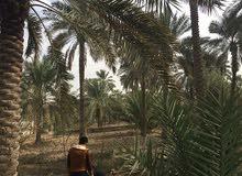 دونم على نهر حمدان