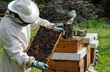 انشاء مناحل لإنتاج العسل