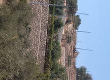 مزرعه للبيع في جلعد مع بيت ريفي مشغوله بالكامل مشجره مسوره مطله مرتفعه