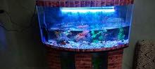 حوض سمك كامل للبيع