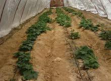 مزرعة للبيع 12 فدان قابلين للتجزئه حتي 2 فدان