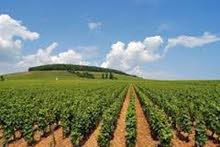 للبيع أرض زراعية 6 فدان بقرية الرضوان