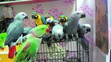 نشتري جميع الطيور الأليفة او الأزواج