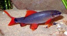شركة البروف لتصدير اسماك الزينة --- الى رغبى تصدير اسماك الزينة من مصر الى جميع انحاء الوطن