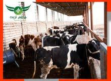 مزارع للبيع داخل كمبوند الهاشمية