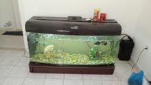 حوض سمك ألماني  حجم كبير للبيع