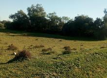 قطعة ارض مساحتها 1000م