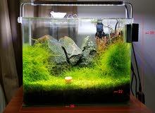 حوض سمك نباتي احترافي