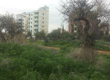 ارض مرخصة للبناء مساحة 19 دونم