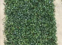 عرض خااص العشب الجداري جوده عاليه