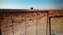 14 دنم مشيكه كامل وخزان ماء --للعمل مزرعه ع سعر ممتاز-في ذيبان جنوب مادبا ---للبيع