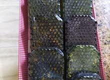 صابون علاجي بالعسل والعكبر لحب الشباب صابون بالعسل وحبوب اللقاح لتفتيح البشره