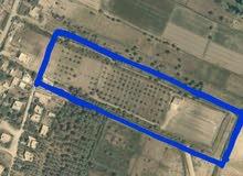 ارض زراعية للبيع المساحة 14 دونم ونص اليوسفية