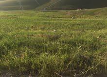 قطعة ارض للبيع في زينات الربوع حوض الشكاره