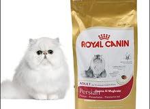 رويال لقطط  الفارسية