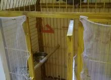 قفص ببغاء مستعمل للبيع