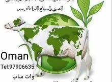 إثمار للتنمية والإستثمار الاعلاف البرسيم الحجازي المصري