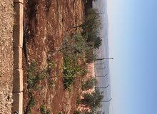 ارض بجرش مطلة على سد الملك طلال