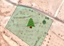 قطعة ارض زراعية للبيع في الكرك زحوم 5 دونمات