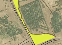 مزرعة للبيع فالسنينة بمحافظة البريمي