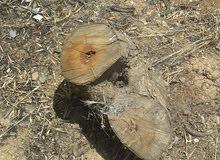 تقطيع اشجار وحطب النار إلى قطع صغيرة