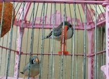 طيور فناجس