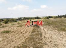 ارض زراعية بمساحة 9075 م²