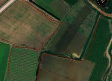 مزرعة للبيع 22هكتار