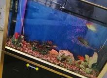 حوض أسماك زينة للبيع