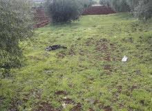 قطعة ارض ممزية للبيع في النعيمة