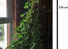 natural Plant 160 cm height