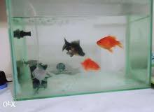 سمك زينة+حوض