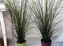 نباتات مع الفازات عدد 2