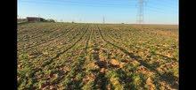 مزرعة بالخزازنة تيفلت 6 هكتارات