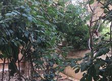 شقة في عمارة سكنية  للبيع عمان ضاحية الامير حسن عمارة رقم 27