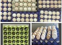 بيض مخصب دجاج فرنسي بيور سوبر جمبو