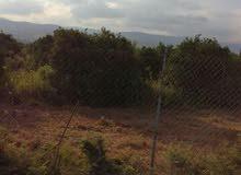 بيارة حمضيات للبيع في الاغوار الشمالية / وادي الريان